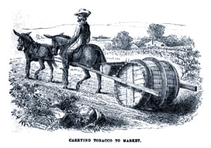 Carrying Tobacco to Market