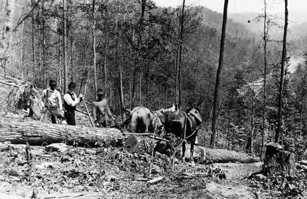 Team of Horses Hauling Logs to Kendall Saw Mill