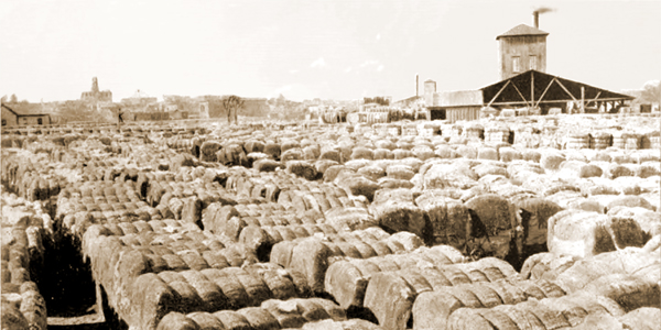 Bales of Cotton Awaiting Transport, Tallahassee