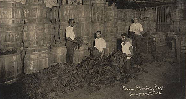 S. Hernsheim Brothers & Co - Tobacco Blending Department